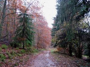 Forêt_domaniale_de_La_Petite-Pierre_Sud_(1)